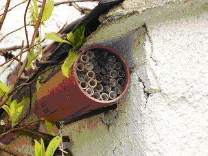 Man-made solitary bee house